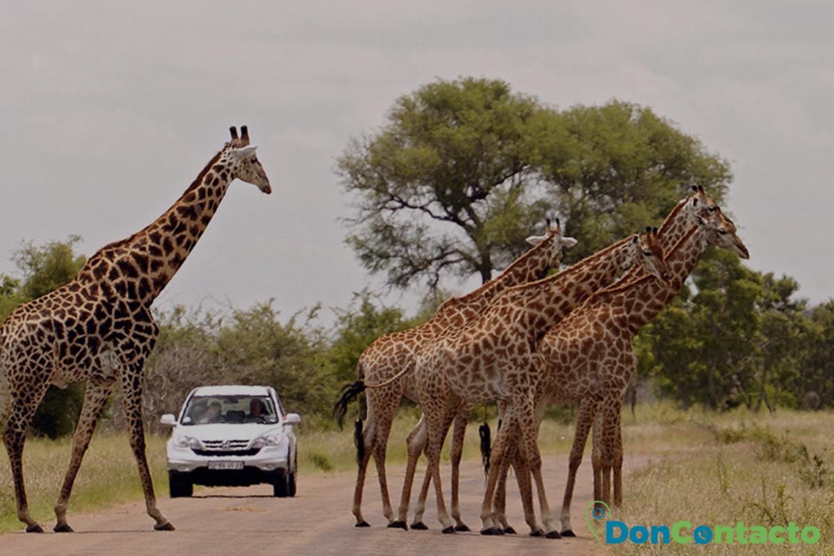 Parque nacional de Kruger,